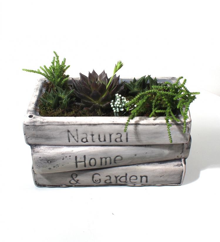 Home & Garden Seramikte Terrarium Bahçesi