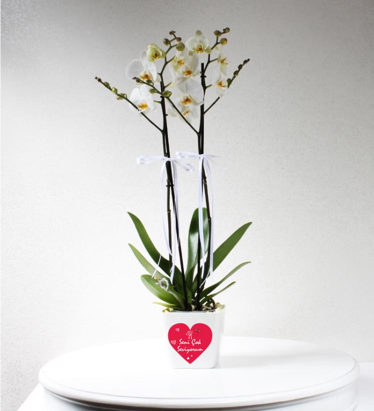 Sevgiliye Beyaz 2 Dallı Phalaenopsis Orkide