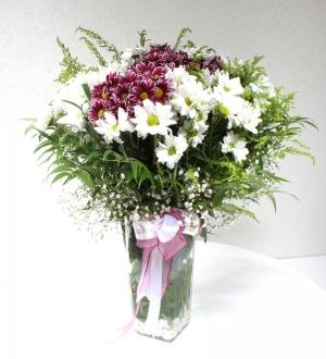 Cam Vazoda Krizantem Çiçekleri