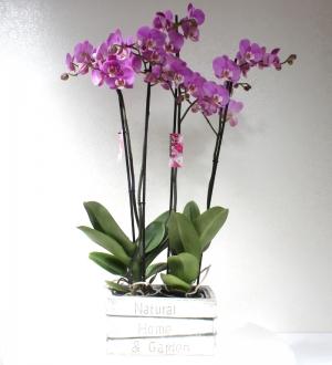 Dekoratif Seramikte 4 Dallı Pembe Orkide