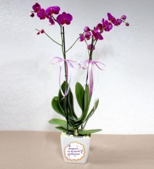 Dünyanın En Düşünceli Öğretmenine Pembe Orkide