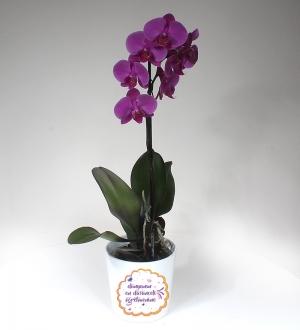Dünyanın En Güzel Öğretmenine Pembe Orkide