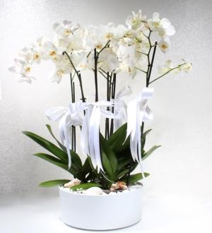 Seramikte 6 Dallı Beyaz Phalaenopsis Orkide