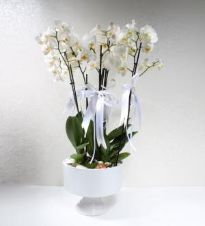 Seramikte 5 Dallı Beyaz Phalaenopsis Orkide