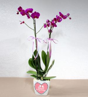 Sevgiliye Pembe 2 Dallı Phalaenopsis Orkide
